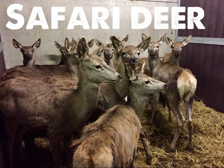 Logo-Safari-Deer